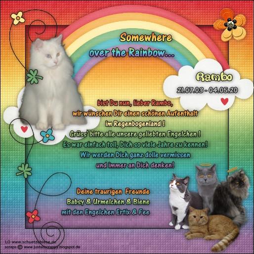 An den Beitrag angehängtes Bild: http://www.schuetzebiene.de/Diverses/rainbow-memory-Rambo-RC.jpg