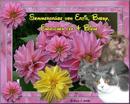 An den Beitrag angehängtes Bild: http://www.schuetzebiene.de/sonstiges/sommergruss-hp-08.jpg